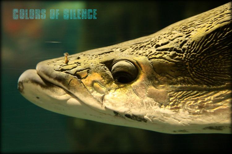 aquarium-1.jpg