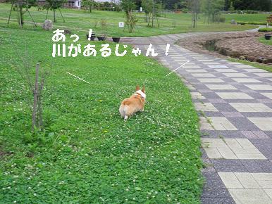 IMGP1681.jpg