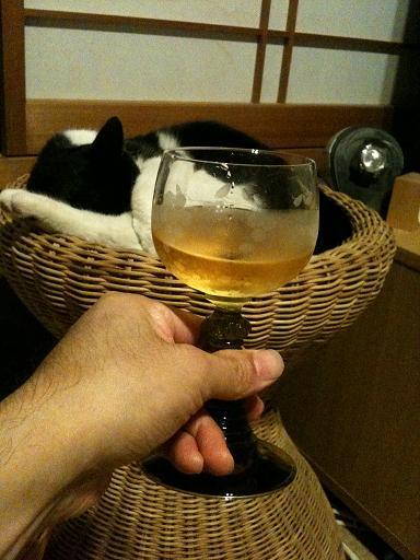 ネコに乾杯