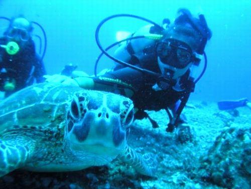 沖縄冬休みお正月でも潜れる学生団体オススメ人気のダイビング