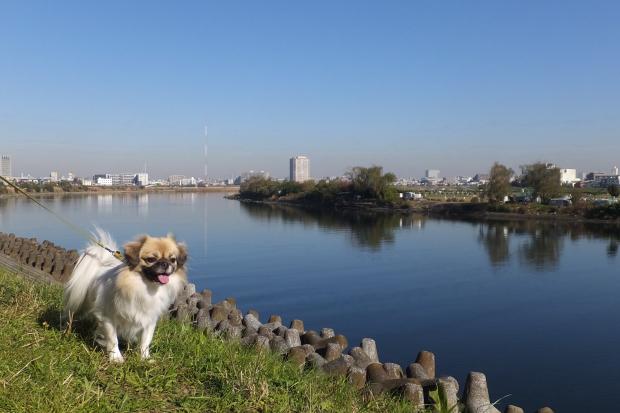 ①冬晴れの多摩川