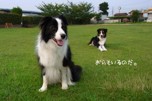RIMG1389_20100801105407.jpg