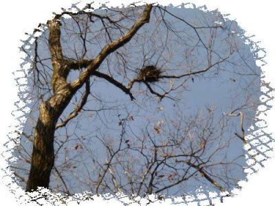 鳥の巣!!