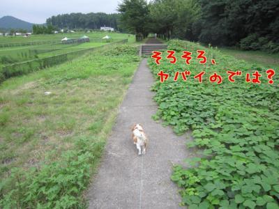 草の海?!