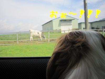 牛さん、見つけた~!!