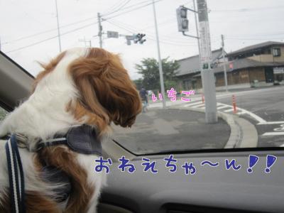 朝のお別れ><;