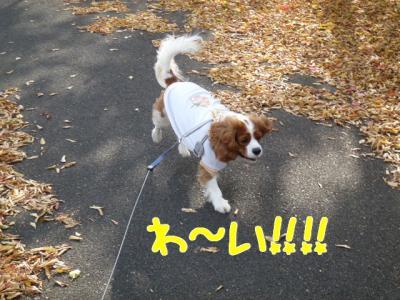 次のお散歩へ。