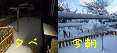 雪だよ!!