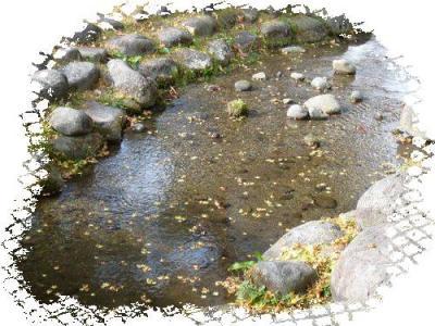 川に落ち葉・・・。