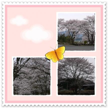 桜咲いたね~!!