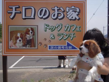 看板犬!!