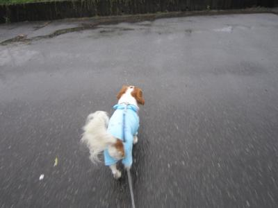 雨です!!