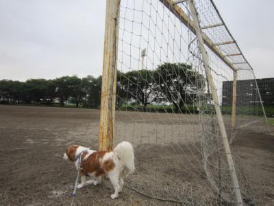 サッカーゴール?!