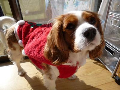 クリスマスのコート!!