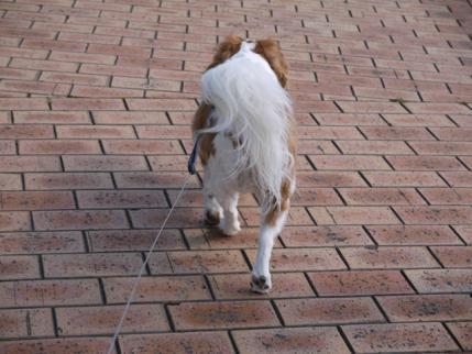 歩け、歩け~!!