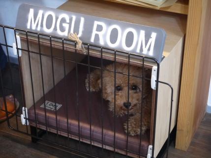 モグ君!!