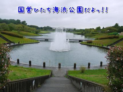 国営ひたち海浜公園です!!