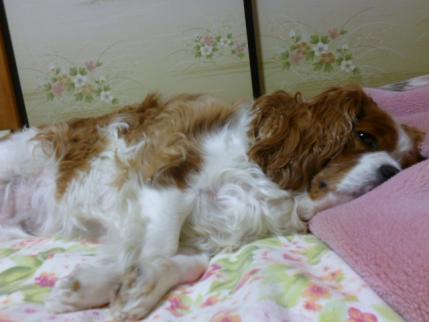 眠いよ~!!