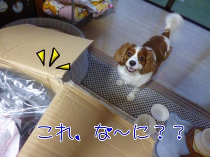 何だ、これぇ~??