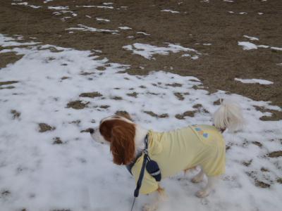 まだ、雪がいっぱい!!