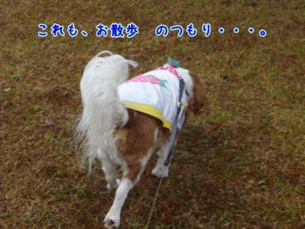 午前中のお散歩にて!!
