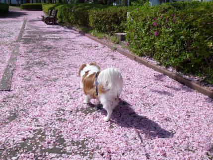 ピンクな道!!