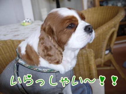 いらっしゃい~!!