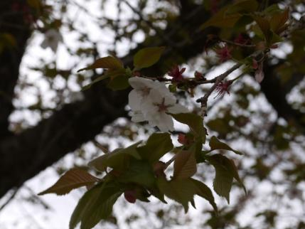 葉桜に!!