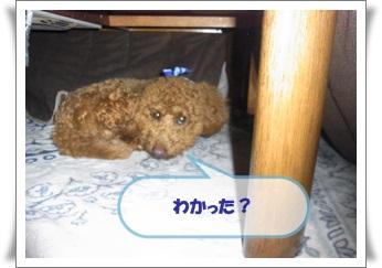 2011_0303_132052-R1008354.jpg