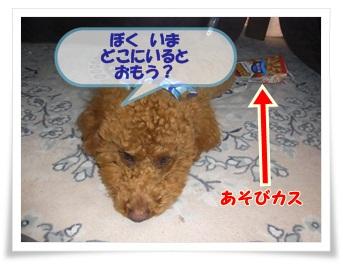 2011_0304_135835-R1008371.jpg