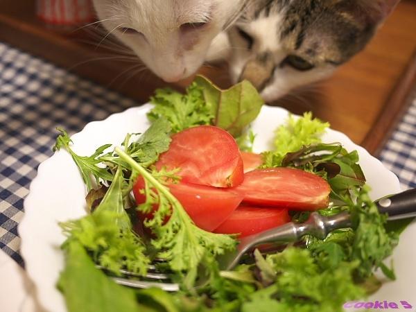 ねこサラダ