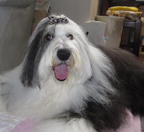 Cookie_20120618223901.jpg