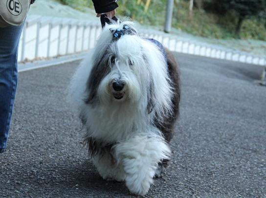Cookie_20121210234159.jpg