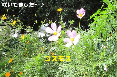 resize6809.jpg