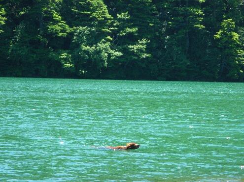 泳ぐコーク