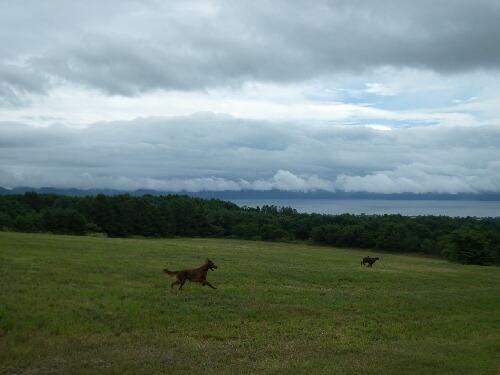 牧草地で・・・