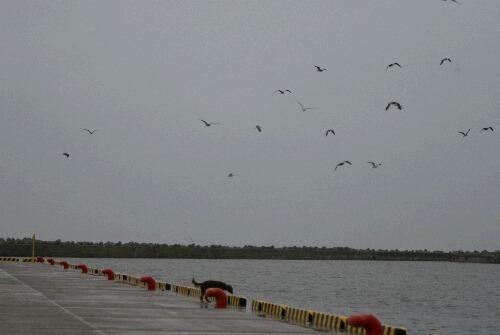 2010.11.15 港にて