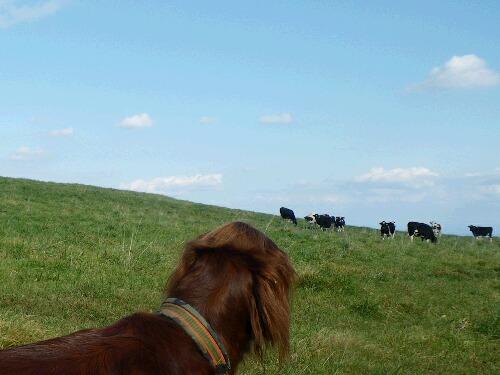 牧草地にて放牧