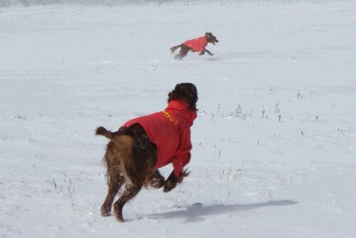 2010.12.04 今季初の雪遊び
