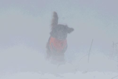 2010.12.04 雪の中のスライゴ