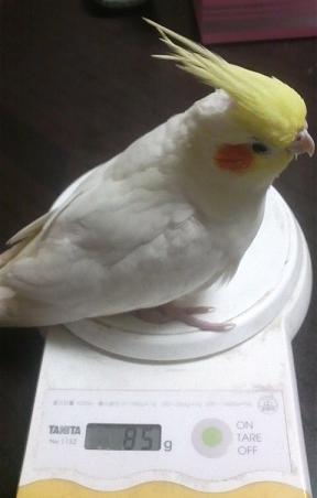 11月11日、鈴ちゃん体重測定