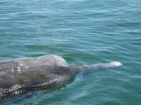 ツチクジラ4