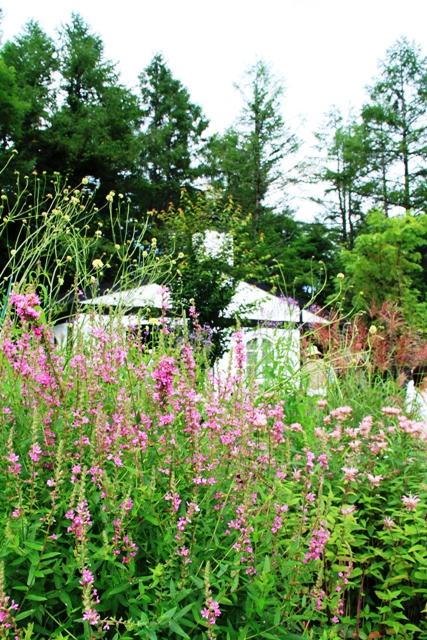 072ピンクの花とハウス