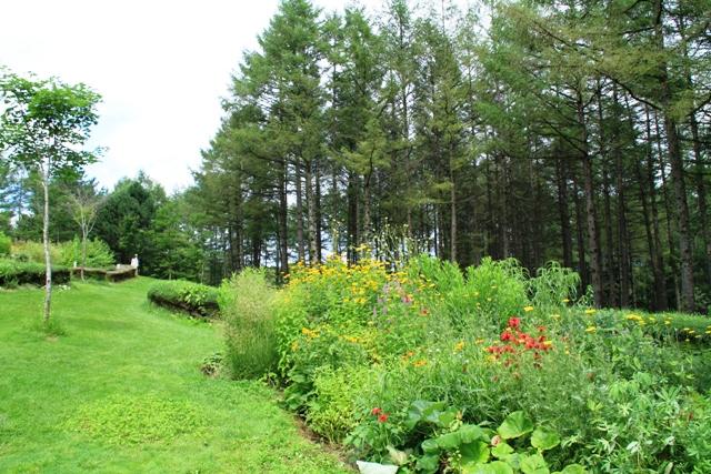 105芝の垣根