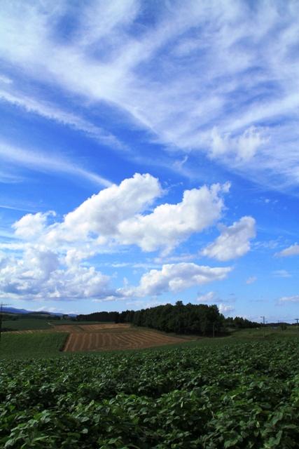 168雲とビート縦