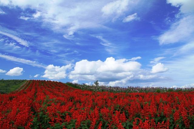 175赤い花と空