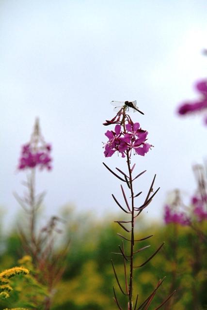 153花とトンボ