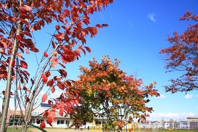 054保育園の紅葉