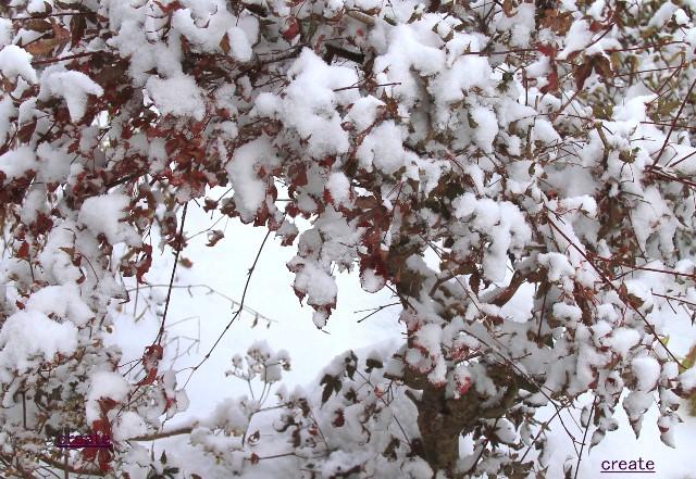 027雪に埋もれて