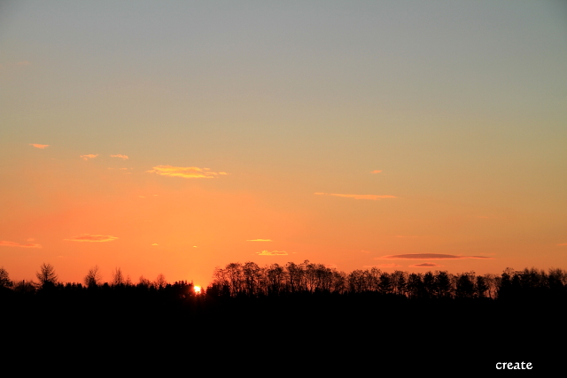 DPP0 668 126林の中から太陽が0443